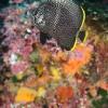 ナズマドの水面はクシクラゲとトビウオの幼魚でいっぱい