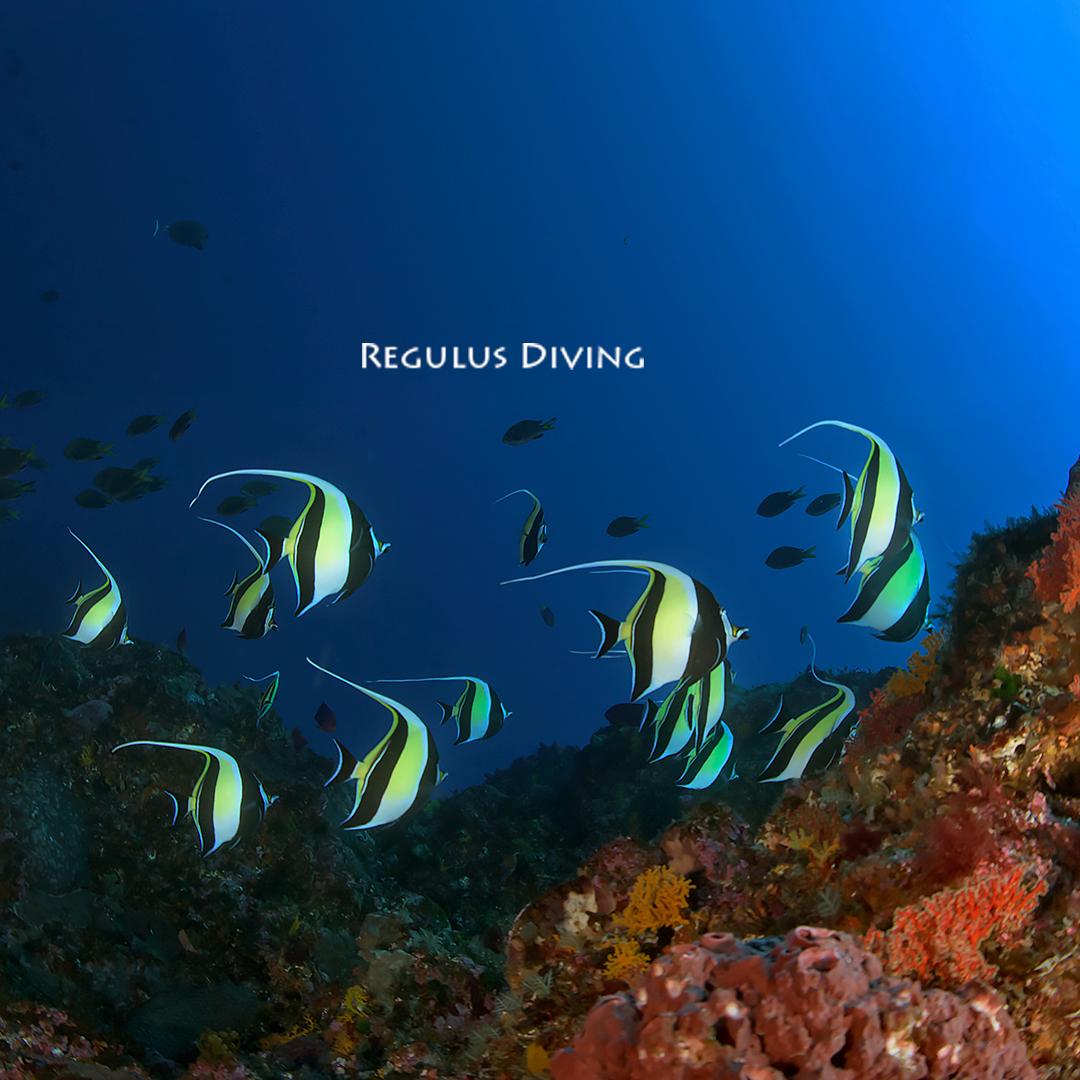 八丈島, ダイビング, 水中写真