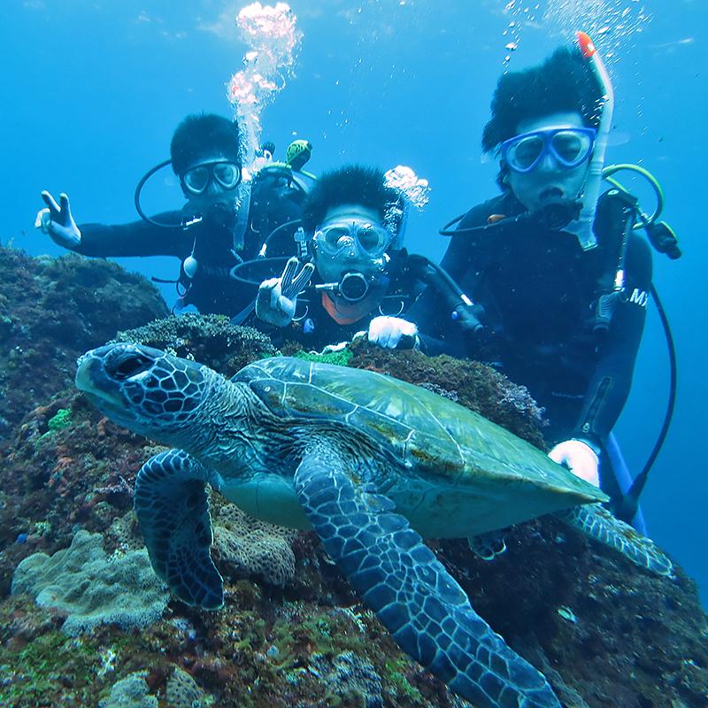 八丈島, 体験ダイビング