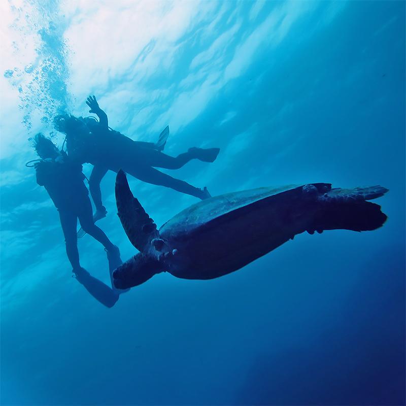 水中写真, 体験ダイビング, カメ