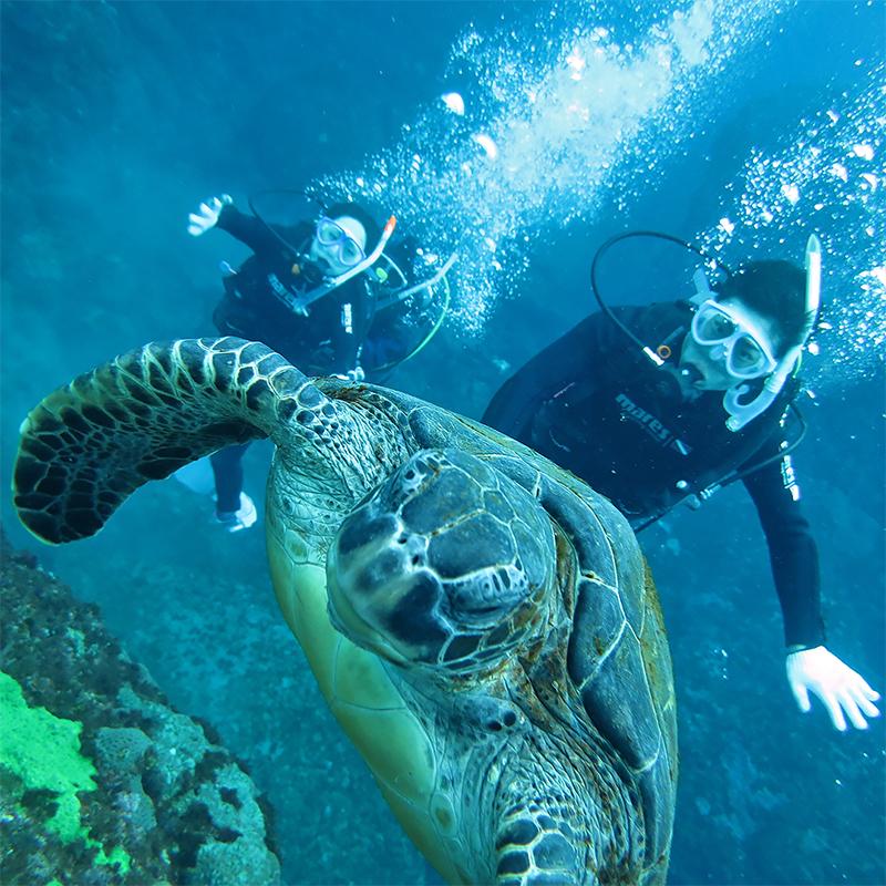 体験ダイビング, カメ, 水中写真