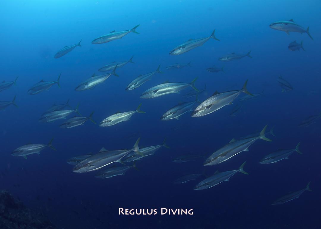 八丈島 ダイビング 海況速報