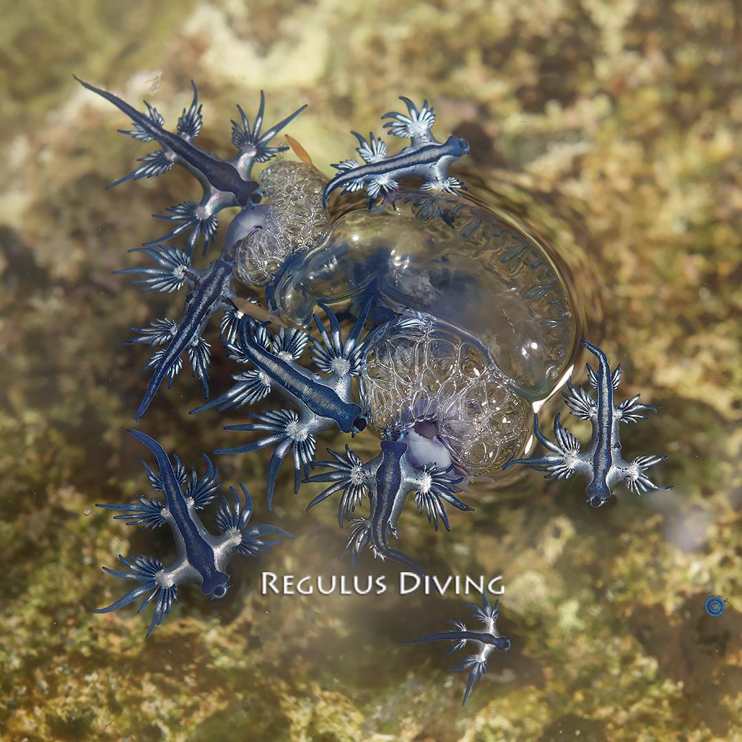 八丈島 ダイビング 水中写真 ウミウシ 海況速報