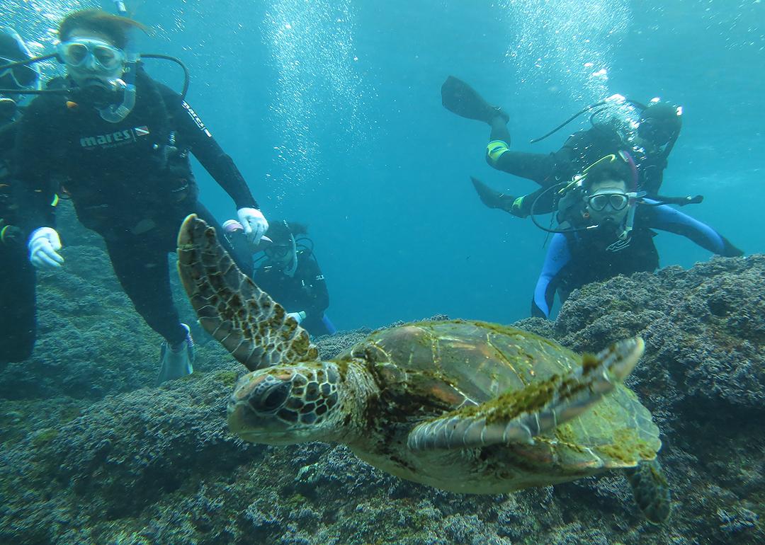 八丈島 体験ダイビング カメ